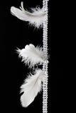 White feathers. Hanging against dark black background Stock Photo