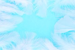 White feathers Stock Image