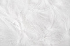 White feathers. Simple easter background - white feathers on white background Royalty Free Stock Images