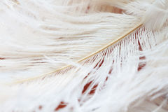 White feathers background Royalty Free Stock Images