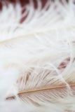 White feathers background Royalty Free Stock Image