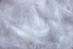 White feathers background Royalty Free Stock Photography