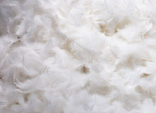 White Feathers. Close-Up of Pile of White Fluffy Feathers Royalty Free Stock Photos