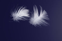 White Feathers Floating on Blue Royalty Free Stock Photos