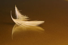 White Feathers on Gold. Two very small white feathers on glass with gold paper underneath Royalty Free Stock Photos