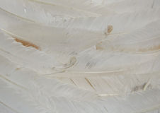 White feathers. Layers of white feathers to create a soft textured background royalty free stock photography