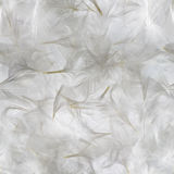 White Feathers Pattern Royalty Free Stock Photography