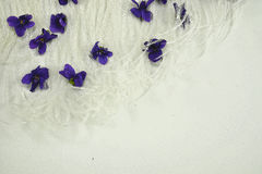 White feathers and purple flowers Royalty Free Stock Photos