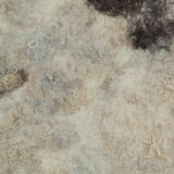White felt with black spots Royalty Free Stock Photos