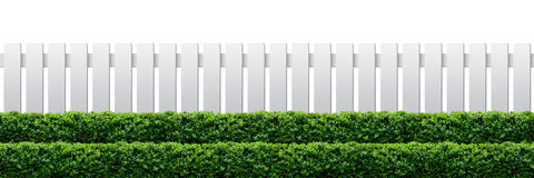 White fence. And hedge on white background royalty free stock photography