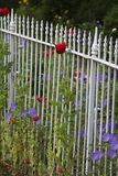 White fence with flowers Stock Image