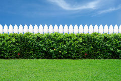 White fence and green grass. On blue sky stock images