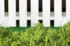 White fence and green grass on blue sky. royalty free stock photo