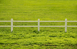 White fence and green grass in Farm Royalty Free Stock Images