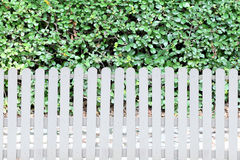 White fence and green leaves in the garden. Stock Image