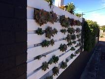 White fence, green plants Royalty Free Stock Photo