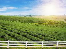 White fence and green tea field with blue sky. Stock Photography
