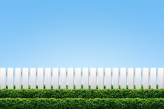 White fence and hedge. On clear blue sky Stock Images