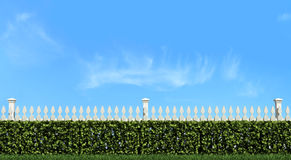 White fence and hedge on blue sky Stock Images