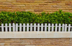 White fence,  Ornamental plants. Royalty Free Stock Photography