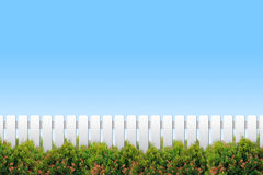 White fence and shrubs. On blue sky Stock Photography