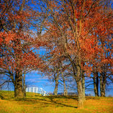 White fence. Traditional white horse farm fence behind the trees in Kentucky in fall Royalty Free Stock Photo