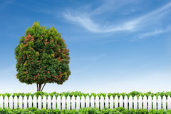 White fence and tree on blue sky. White picket fence and tree on blue sky royalty free stock photo