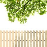 White fences with green leaves Stock Images
