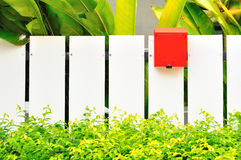 White fenec  and red mail box Stock Photography