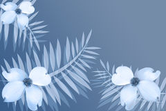 White Ferns and Dogwood Flowers. Dogwood flowers on blue and white background with ferns Stock Image