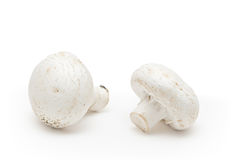 White field mushrooms. Isolated on white background Stock Photo