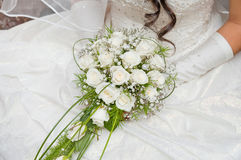 White fine rose Stock Photos