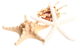 White finger starfish and seashells on white Stock Images