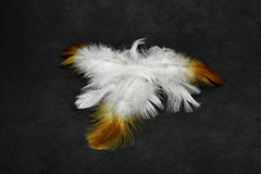 White and fire feathers on a grunge background Royalty Free Stock Photography