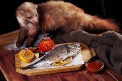 White fish dorado whole vegetables, seabass mink stuffed taxidermy Royalty Free Stock Photography