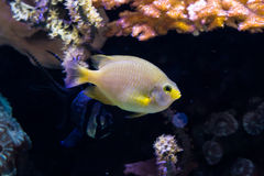 White fish with yellow tint Stock Photo