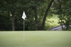 White Flag over Lush Golf Green. Lush golf course green in summer with white flag pin Royalty Free Stock Images