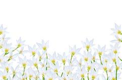 White flora Royalty Free Stock Image