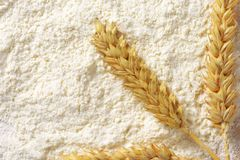 White flour with wheat ears Stock Image