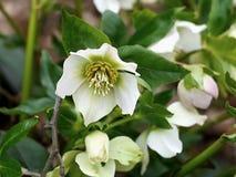 White flowe. Small white flower in the garden Stock Photo