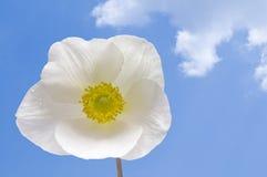 White flower. Against the blue summer sky Stock Photos