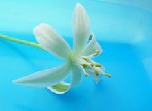 White flower. Flower stock photos