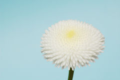 White flower Stock Images
