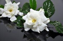 White flower. Isolated on black background Stock Photos