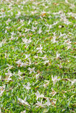 White flower. S on green grass Stock Photos