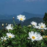 White flower. On the mountain Royalty Free Stock Images