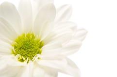 White flower Royalty Free Stock Photo