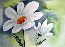 White Flower. Photograph of a watercolor painting, created by the photographer Stock Photos