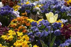 White flower. In garden royalty free stock photos