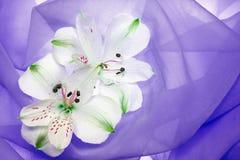 White flower. On azure background Royalty Free Stock Photos